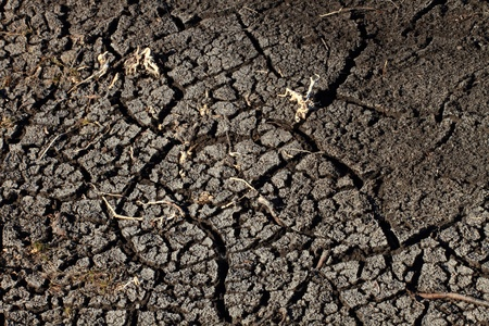 Cracked and parched dry earth with dried up plants