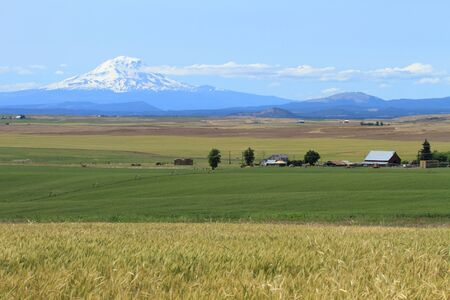 Mount Adams and farm fields in Washington, U.S.A. Stock Photo