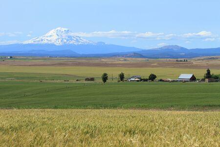 grain fields: Mount Adams and farm fields in Washington, U.S.A. Stock Photo