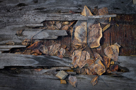 Grungy autumn leaves on a piece of old plywood Imagens