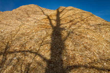 forest products: Large pile of wood chips at a plywood processing plant with tree shadows