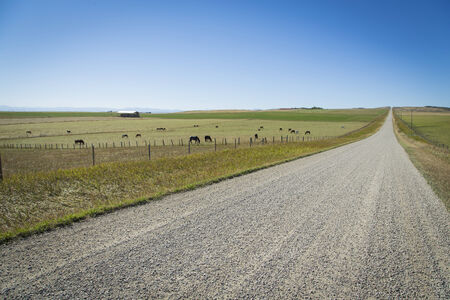 Gravel road and horses on a summer day in the open countryside of southern Alberta, Canada