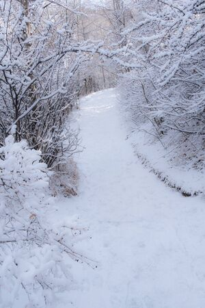 winter tree: Snow covered winter pathway through the forest
