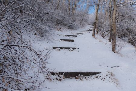 Snow covered winter pathway through the forest