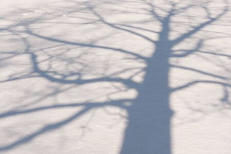 Shadow of a winter tree with bare branches and on a field of snow Stock Photo