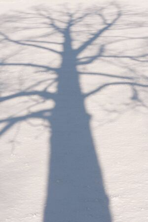 Shadow of a winter tree with bare branches and on a field of snow Banque d'images