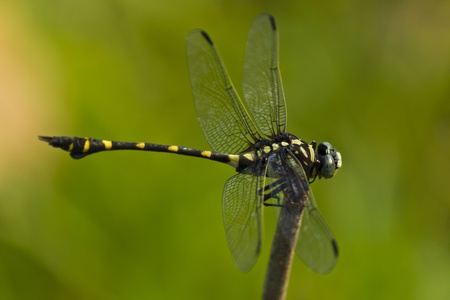 this is a dragonfly Stock Photo - 13371733