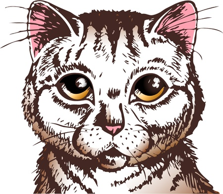 pussycat with big yellow eyes looking straight at you Illustration