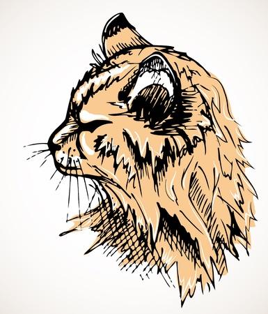 portrait of an orange furry cat Vector