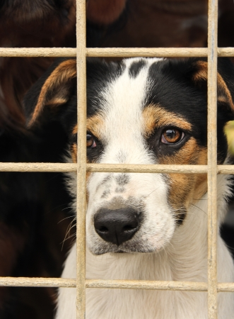 waiting convict: the potrait of a sad looking dog in an iron cage Stock Photo