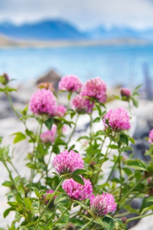 meadow pink blooming flowers near the lake Stock Photo - 17628170