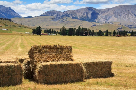 lanscape with haystacks at the harvest time Stock Photo - 17628313