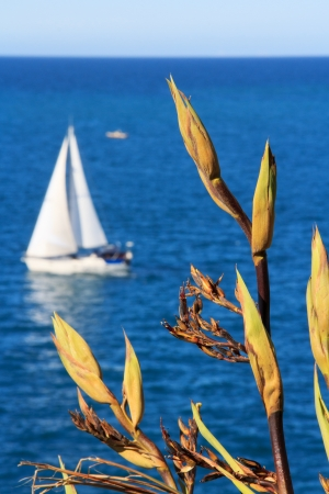 summer sea landscape with a white yacht and a plant at the foreground Stock Photo - 17628179