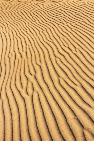 golden sand dunes with an irregular texture Stock Photo - 17628325