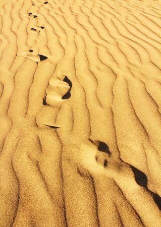 footprints in the golden sand dunes with irregular texture Stock Photo - 17628318