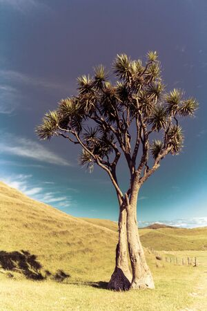 summer sunny landscape with a cabbage tree Stock Photo - 17628300