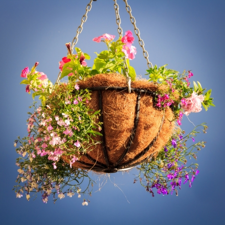 decorative basket with flowers with the blue sky background photo