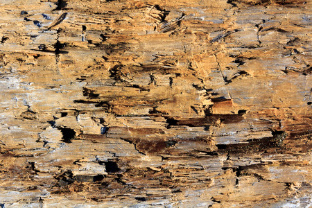 borer: old wood damaged by borer texture background Stock Photo