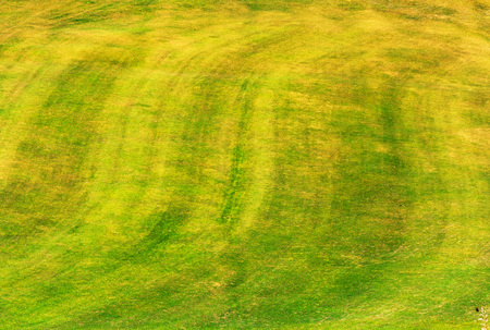 green grass summer time texture background image