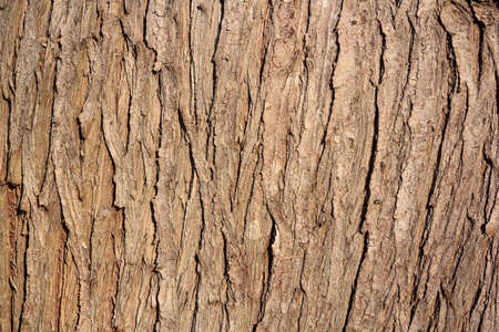 brown old pine bark background texture photography Stock Photo