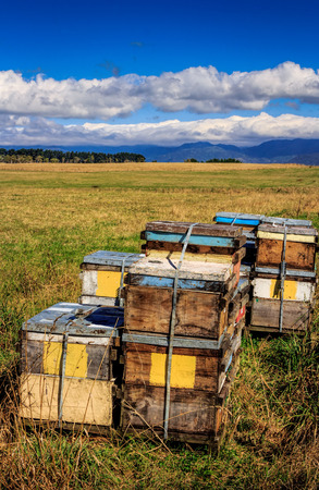 colored beehive farm boxes summer landscape image