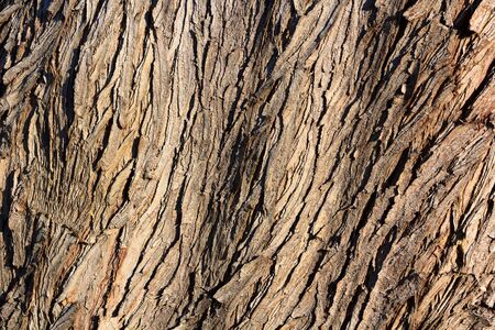 old brown bark texture color background photo