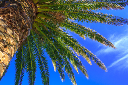 palm tree at the sky, location - New Zealand