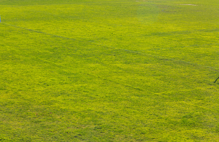 green grass texture background image. Soft selective focus and shallow depth of field