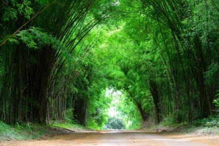 bambu: El alta de bamb� ambos lados de la curva por carretera para cubrir el camino de tierra