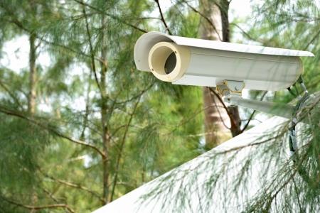 Berwachungskamera auf dem Zaun neben dem Dschungel Standard-Bild - 14097689