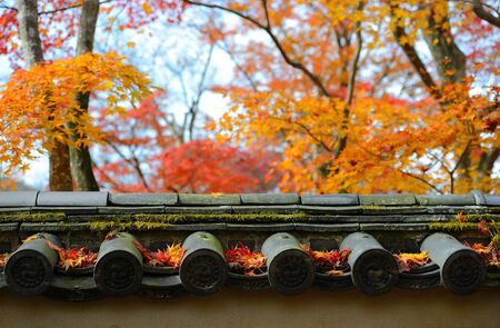 autumn maple leaves are on the japan style roof with colorful maple tree background photo