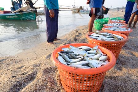 fischerei: frische Makrelen Fische in der Kunststoff-Korb direkten Verkauf von Fischer