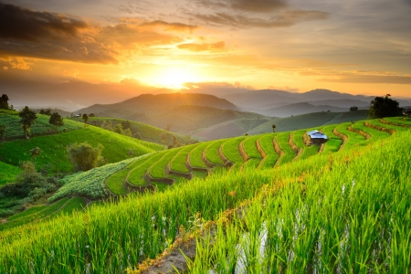 field of thai: Rice Terraces with sunset backdrop at Ban Papongpieng Chiangmai Thailand