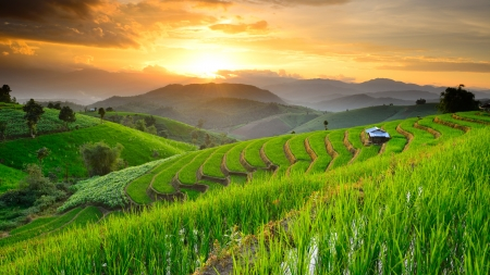 landscape of Rice Terraces with sunset backdrop at Ban Papongpieng Chiangmai Thailand