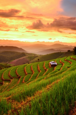 lannscape of Rice Terraces with sunset backdrop at Ban Papongpieng Chiangmai Thailand