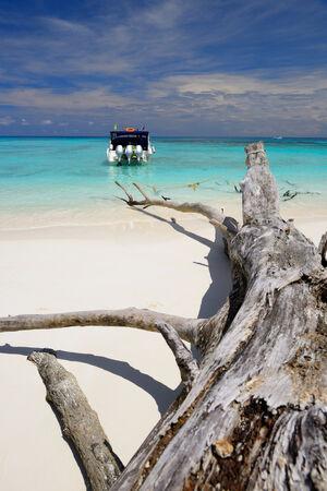 albero secco: barca di velocit� legata con albero secco sulla bellissima spiaggia di sabbia bianca Archivio Fotografico