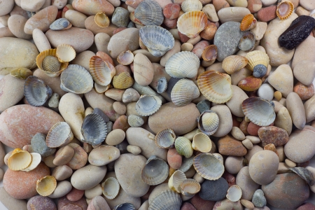 feng: Background from various sea shells and pebbles