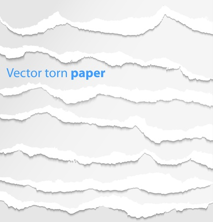 shred: Collection of white torn paper  Vector illustration