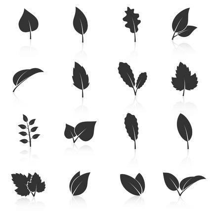 arboles blanco y negro: Conjunto de iconos de hojas sobre fondo blanco. Ilustración vectorial Vectores