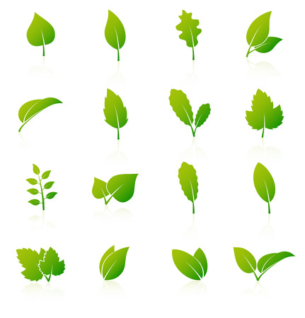 Set of green leaf icons on white background.