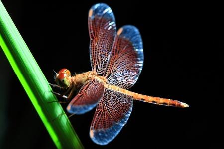Dragonfly Foto de archivo - 11586010