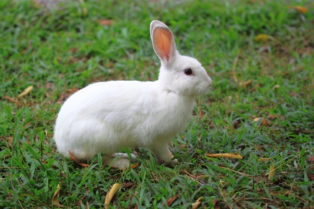 Rabbit in grass photo