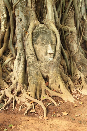 Head of Sandstone Buddha at Wat Mahatat, Ayutthaya,Thailand. Stock Photo