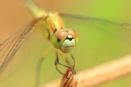 Dragonfly closeup photo