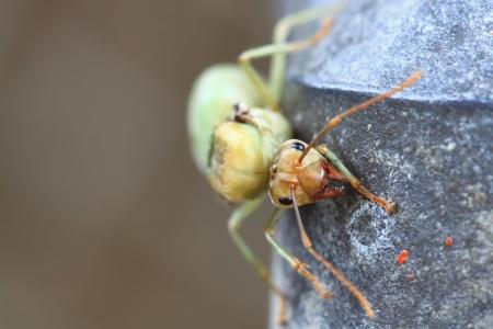 Ant queen Stock Photo - 16586978