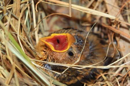 Sparrow on nest photo