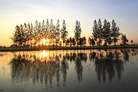 unruffled: Nature in morning time Stock Photo