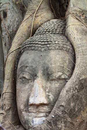 Head of Sandstone Buddha in The Tree Roots Stock Photo - 17500314