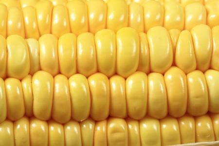 ripe yellow corn closeup as background Stock Photo