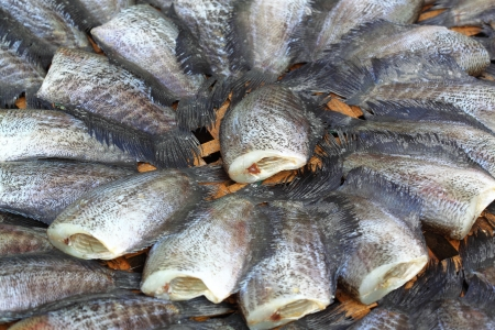 Stall of dry fish for drying in sunlight  Stock Photo